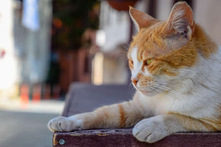 Red cat lying on the box. Red cat portrait near. Stock Photo - 124529518