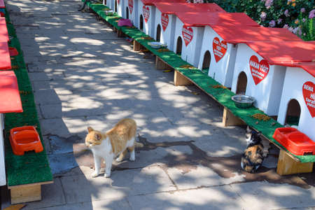 Antalya, Turkey - May 19, 2019: Cat street, cat houses and feeding stray cats on the street