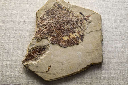 Fossils of ancient fish. Find the skeleton of a fish in the reservoir of rock. Imagens