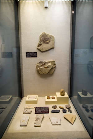 Antalya, Turkey - May 20, 2019: The museum department with petrified shells of ancient mollusks and fish. Ammonites fossilized remains.