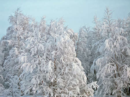 Winter landscape. Trees in the snow, snow and frost all around Banco de Imagens