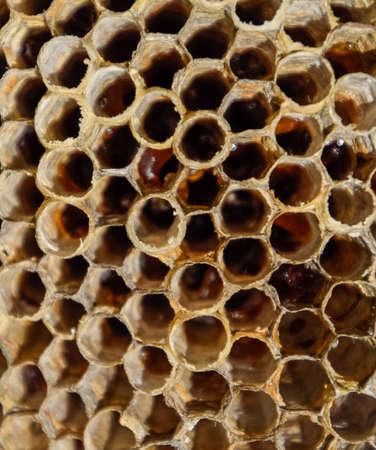 The nest is aspen, polist. The aspen nest at the end of the breeding season. Stocks of honey in honeycombs. Aspen honey.