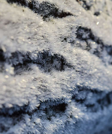 Hoarfrost on tree trunk surface. Winter morning dew and freezing.