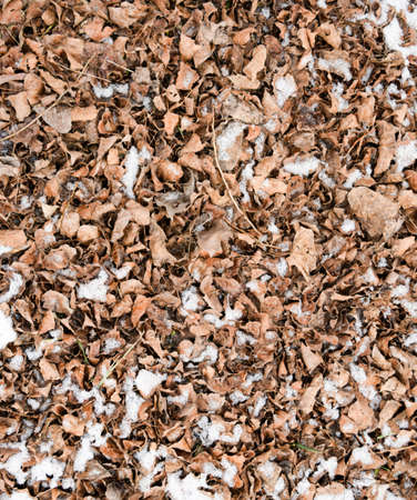 Dry fallen leaves on the ground. Slightly covered with snow leaves. Background of leaves, texture. Archivio Fotografico - 129272835