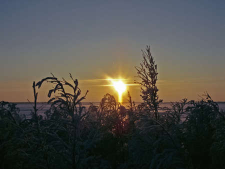 Winter sunset. Snow-covered silhouettes of plants and trees 写真素材