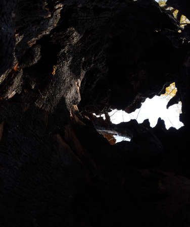 Inside a burnt tree trunk. Hollow in the trunk of a willow. fire in the forest.