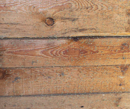 insects on a wooden board, insects fly to the light