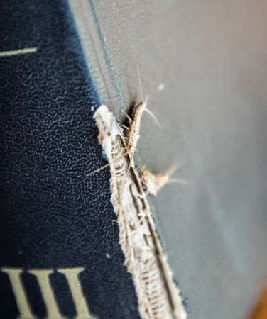 lepisma on the tattered cover of an old book. Insect feeding on paper - silverfish, lepisma. Pest books and newspapers.