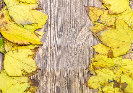 Autumn yellow maple leaves on a wooden background. copyspace of autumn leaves. Standard-Bild - 129488587