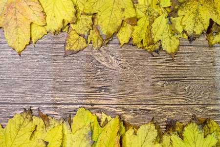 Autumn yellow maple leaves on a wooden background. copyspace of autumn leaves. Standard-Bild - 129488589