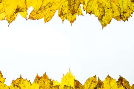 Autumn yellow maple leaves on a wooden background. copyspace of autumn leaves. Standard-Bild - 129488591