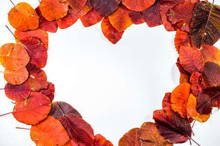 Autumn red leaflets of cotinus coggygria on a white background in the shape of a heart. copyspace of autumn leaves. Standard-Bild - 129488768