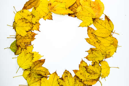 Autumn yellow maple leaves on a wooden background. copyspace of autumn leaves.
