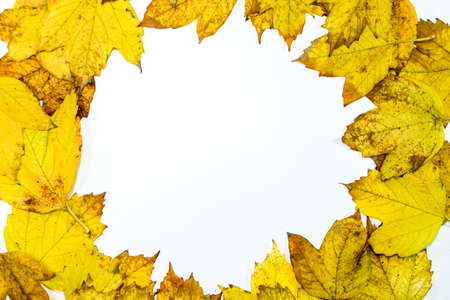 Autumn yellow maple leaves on a wooden background. copyspace of autumn leaves. Standard-Bild - 129488781