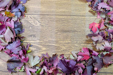 Autumn leaves of golden currant on a wooden background. copyspace of autumn leaves. Standard-Bild - 129486893