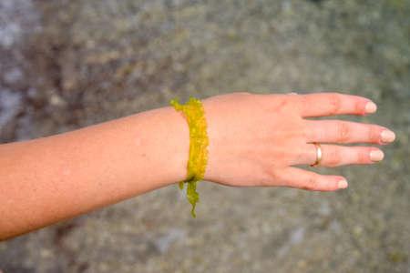 Algae bracelet on a female hand. romantic seaweed decoration Foto de archivo