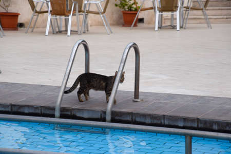 Tabby cat near the pool. Hotel pool Stock Photo