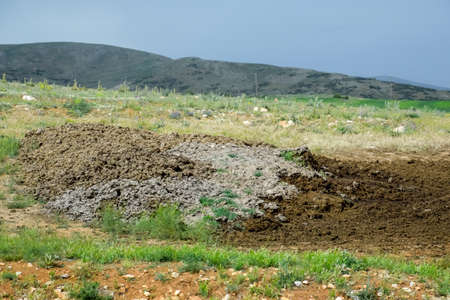 Piles of manure in the field. Cow and horse manure with land.