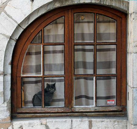 windowpanes: Cat behind the Window Stock Photo