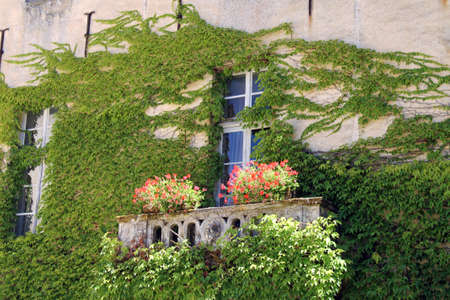 windowpanes: Window with Virginia creeper