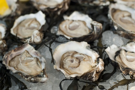 dozens: Traditional serving of fresh oyster in dozens