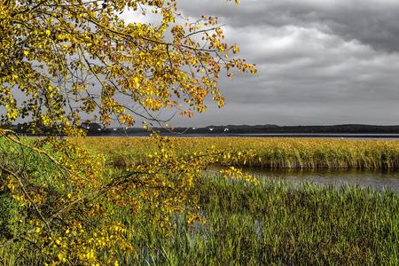 bulrush: clouds on sky yellow sheet and bulrush on coast lake