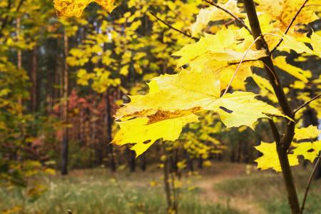 laken: Autumn sheet