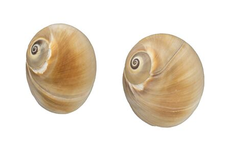 furlough: Shells on white background Stock Photo