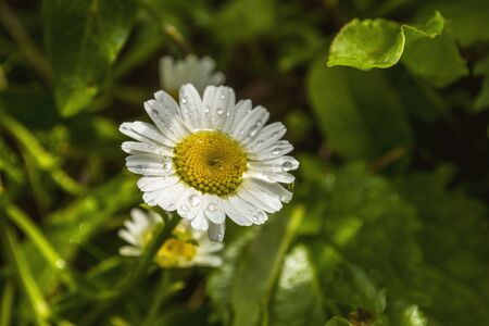 daisywheel: Daisywheel Stock Photo