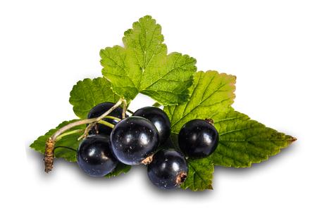 currant: Blackenning currant ripe berries