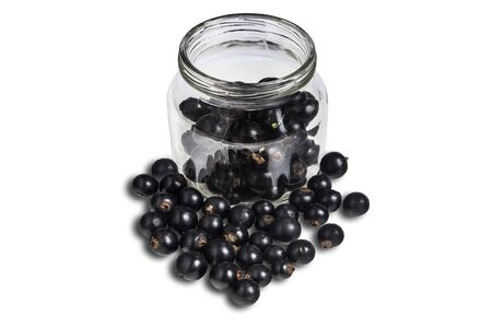 shrubbery: Blackenning currant ripe berries