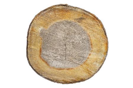 transverse: Cut transverse tree Stock Photo