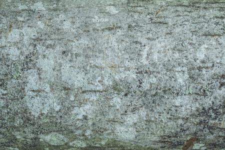 alder tree: Background Cortex tree alder