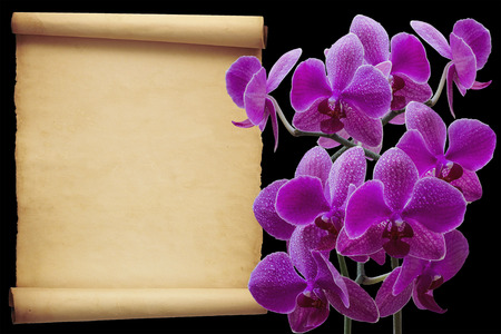 venganza: Orquídea rosada con la venganza para el texto