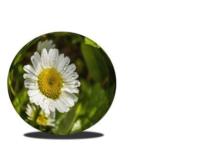 Daisywheel in sphere on white