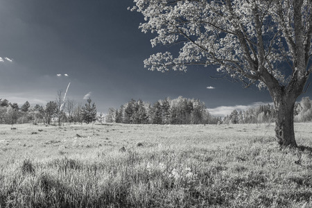 Infrared summer landscape - tree and meadow