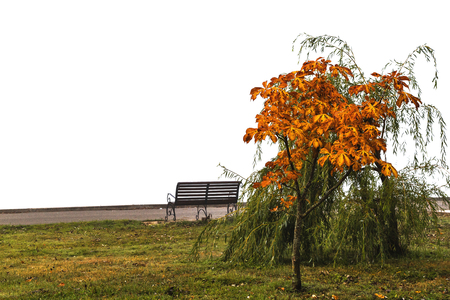 Autumn plant and bench