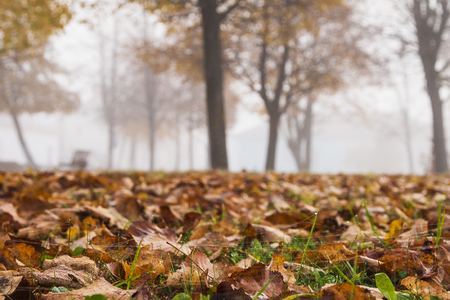 Autumn, Park and dry leaves Stock Photo