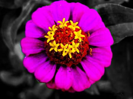 always alive flower