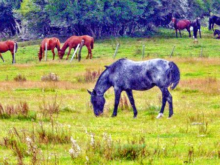 Moor horse grazing