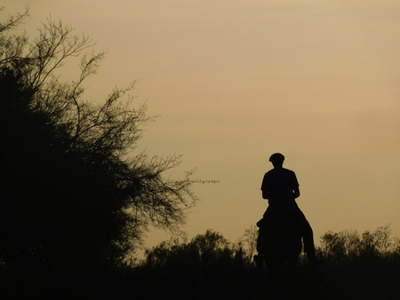 COUNTRY WORKER BACKLIGHT OF THE FIELD TO HORSE Фото со стока - 106686249