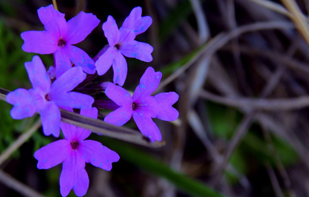 Close up of small wild flowers, very beautiful and colorful, sprouting everywhere when spring arrives