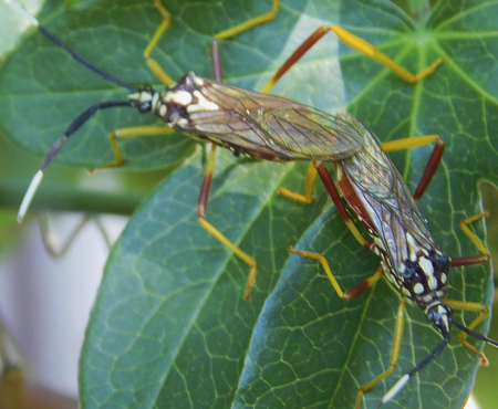 Colorful and beautiful insects,surprised in the garden,mating to reproduce.