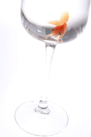 goldfish Stock Photo - 10607038