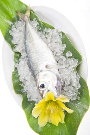 dish of fresh fish photo