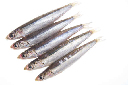 anchovy: bluefish