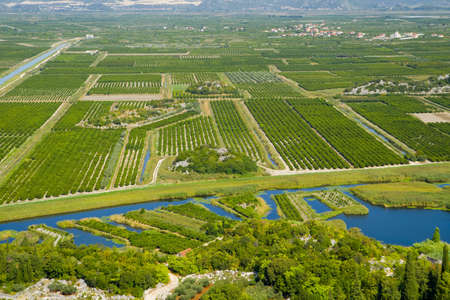 land cultivated with fruit Standard-Bild