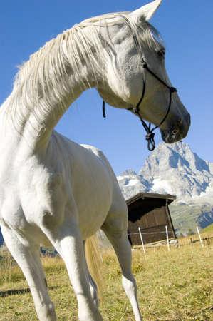 aosta: from Aosta Valley Stock Photo