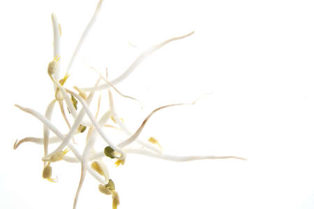 soy sprouts: soy sprouts