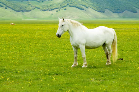 horse in the wild